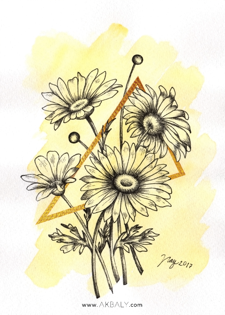 Illustration Collection Floral Prisma Prints Postcards Daisies Close up Ink Watercolor