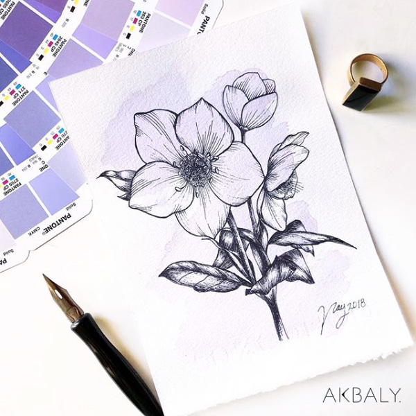 Illustration All In Purple Floral Collection Hellebore Prints Postcards Ink Watercolor
