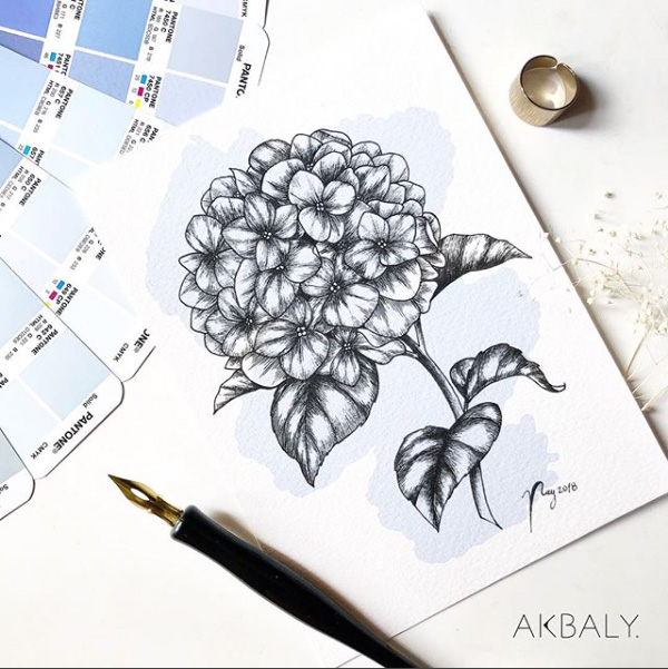 "Floral Illustration for ""Hydrangea"" by Akbaly Prints Postcards Ink Watercolor"