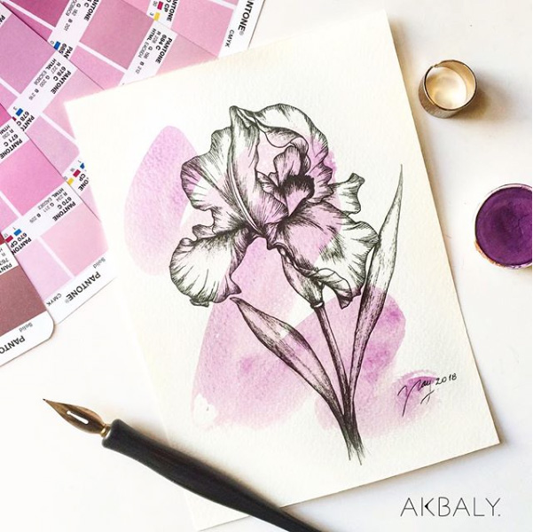Illustration All In fucsia Floral Collection Iris Prints Postcards Ink Watercolor