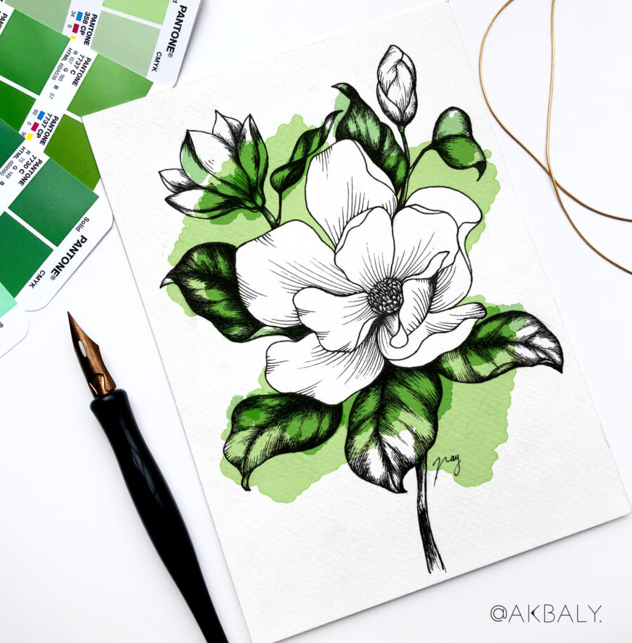 """Illustration """"Magnolias"""" by Akbaly Prints Postcards Pen and Ink"""
