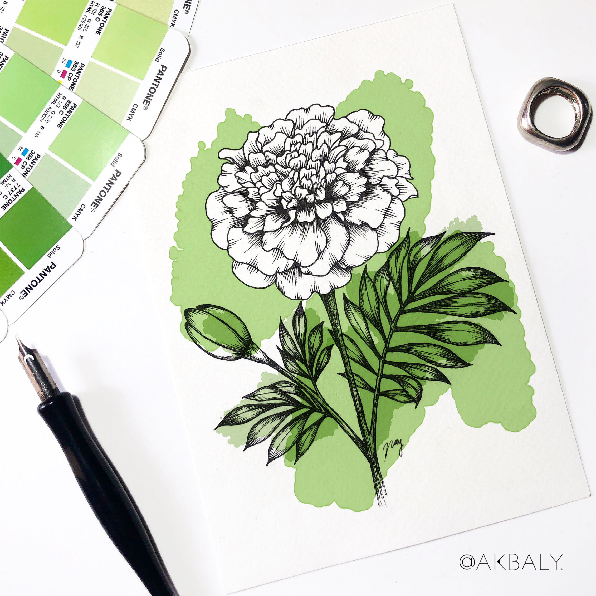 """Illustration """"Marigold"""" by Akbaly Prints Postcards Pen and Ink"""