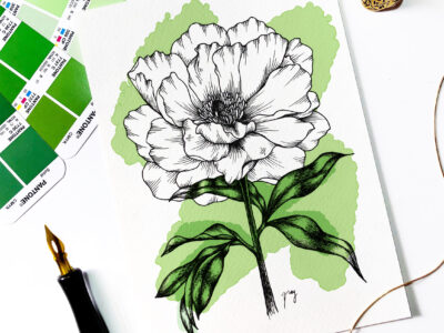 "Illustration ""Peony"" by Akbaly Prints Postcards Pen and Ink"