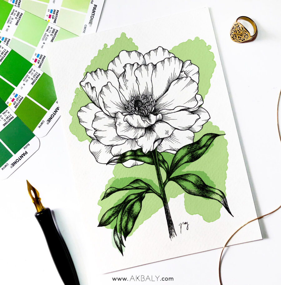 """Illustration """"Peony"""" by Akbaly Prints Postcards Pen and Ink"""