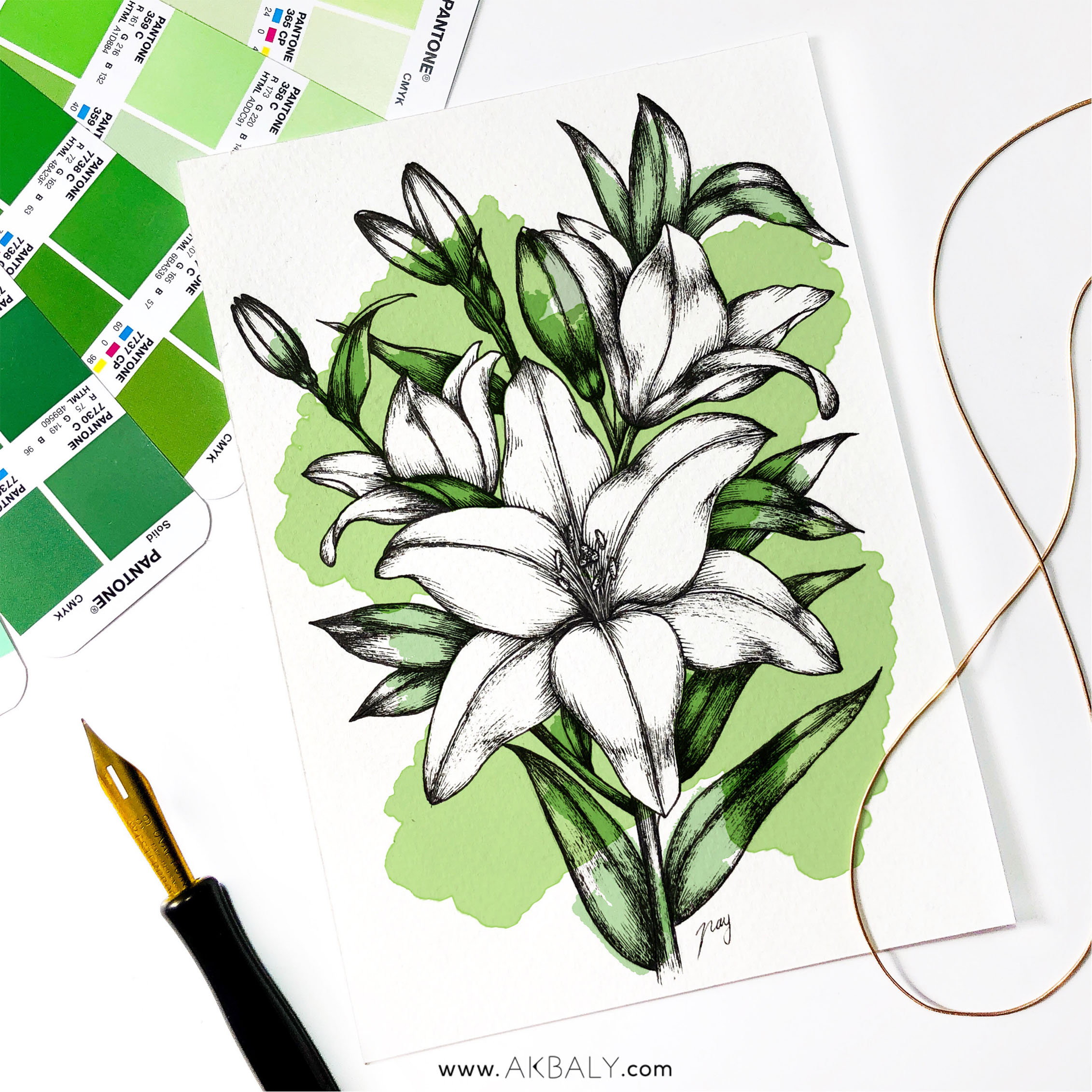 """Illustration """"Lilies"""" by Akbaly Prints Postcards Pen and Ink"""