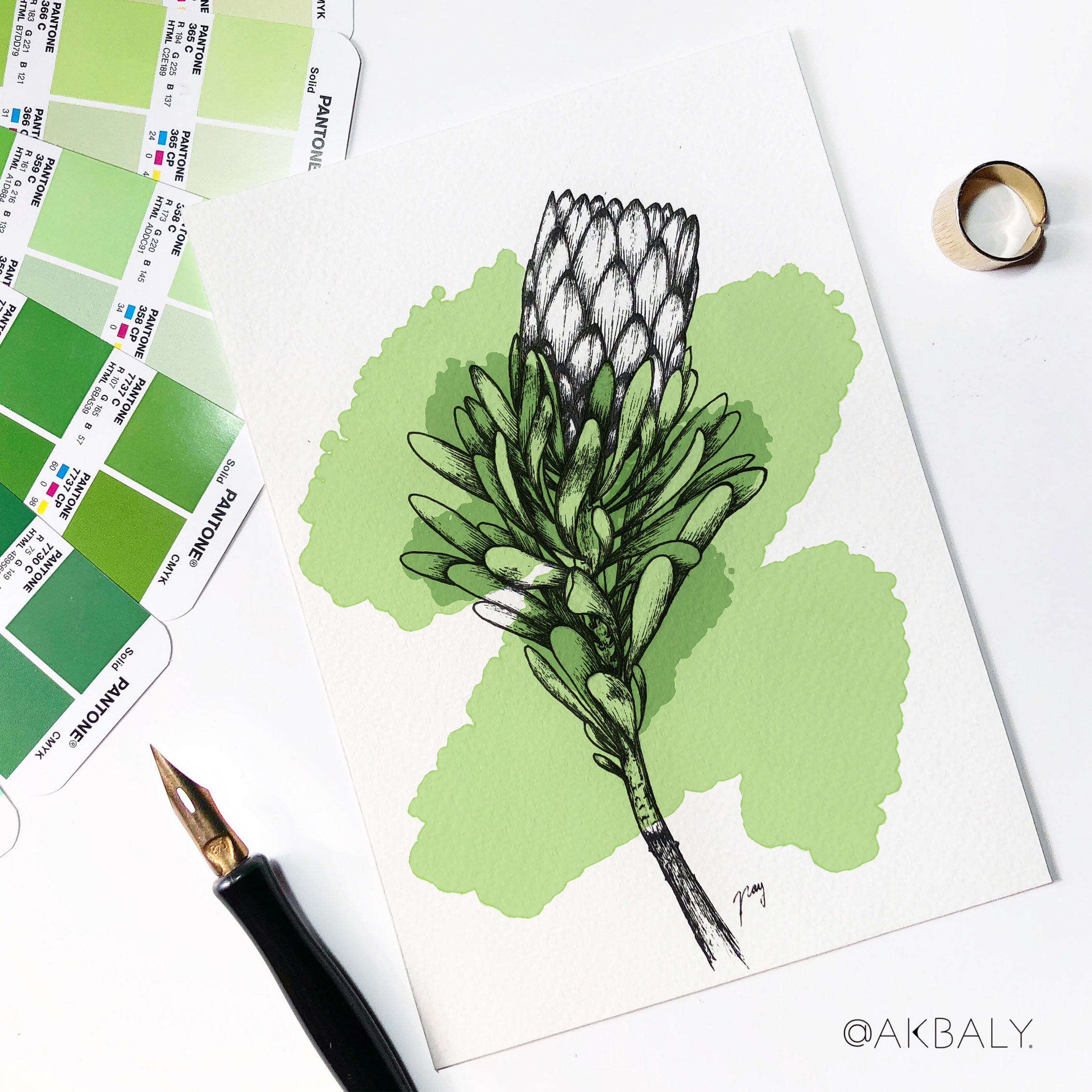 """Illustration """"Protea"""" by Akbaly Prints Postcards Pen and Ink"""