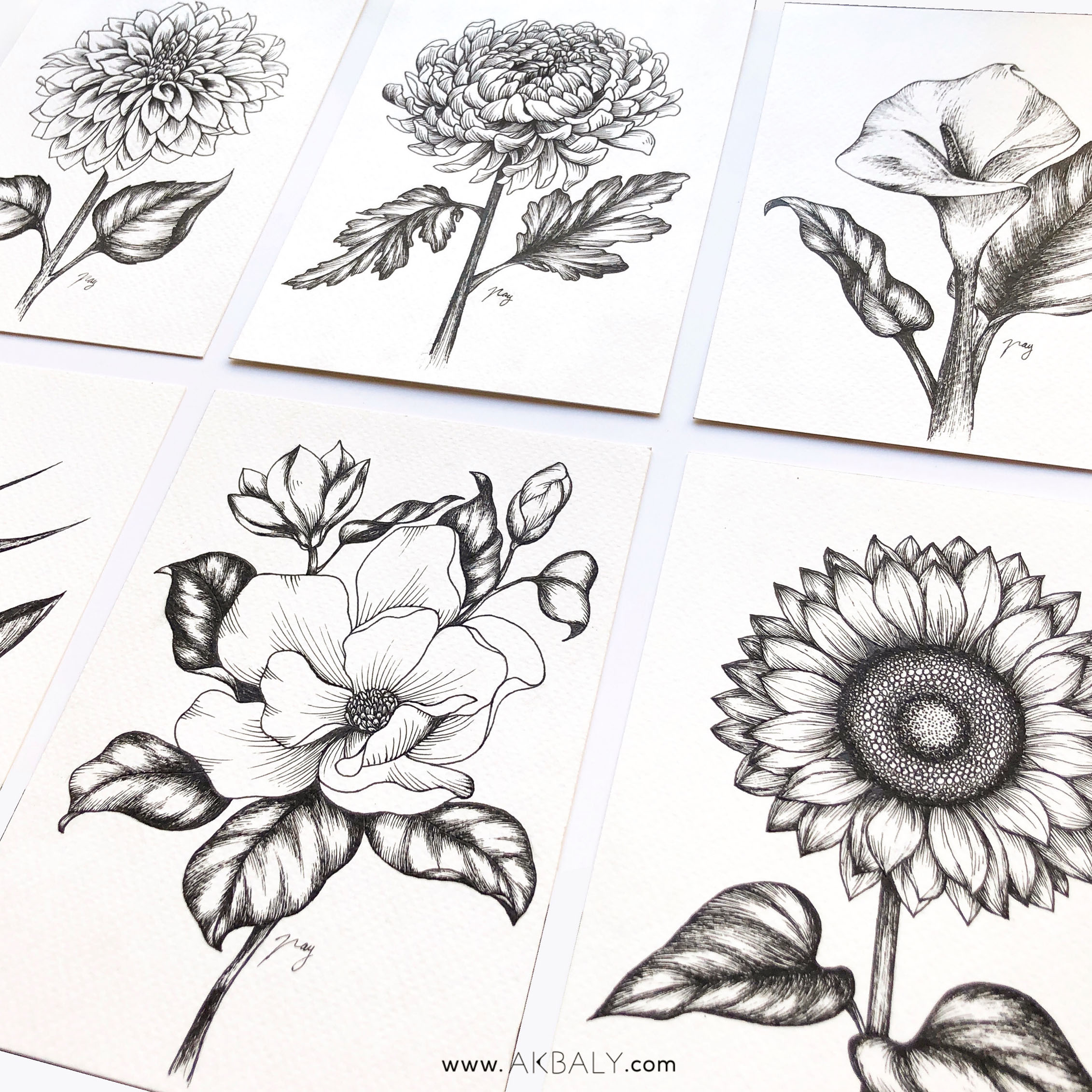 Illustration Botanical Collection by Akbaly Prints Postcards Pen and Ink