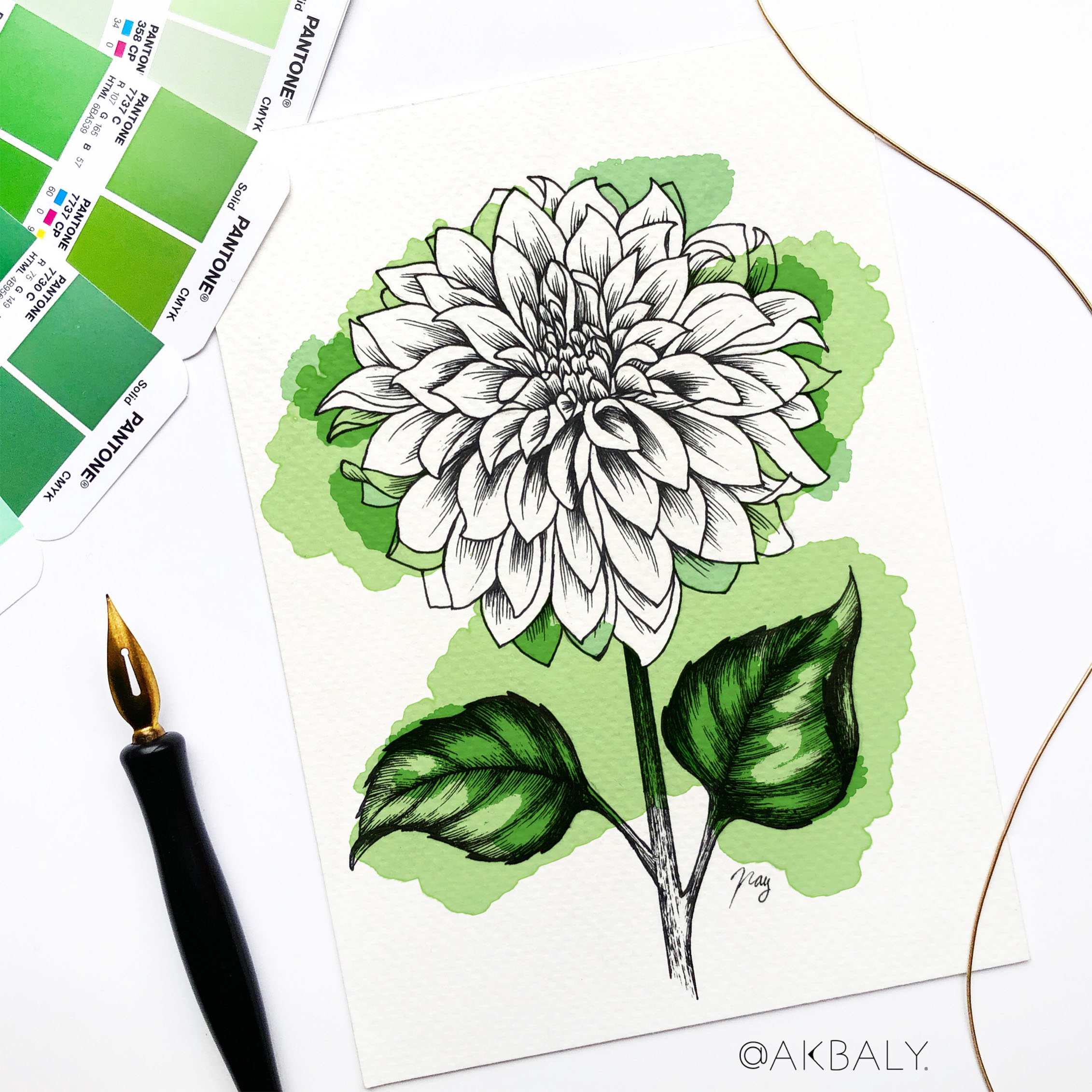 "Illustration ""Dahlia"" by Akbaly Prints Postcards Pen and Ink"