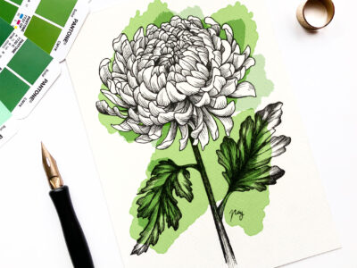 "Illustration ""Chrysanthemum"" by Akbaly Prints Postcards Pen and Ink"