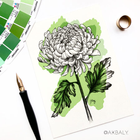 """Illustration """"Chrysanthemum"""" by Akbaly Prints Postcards Pen and Ink"""