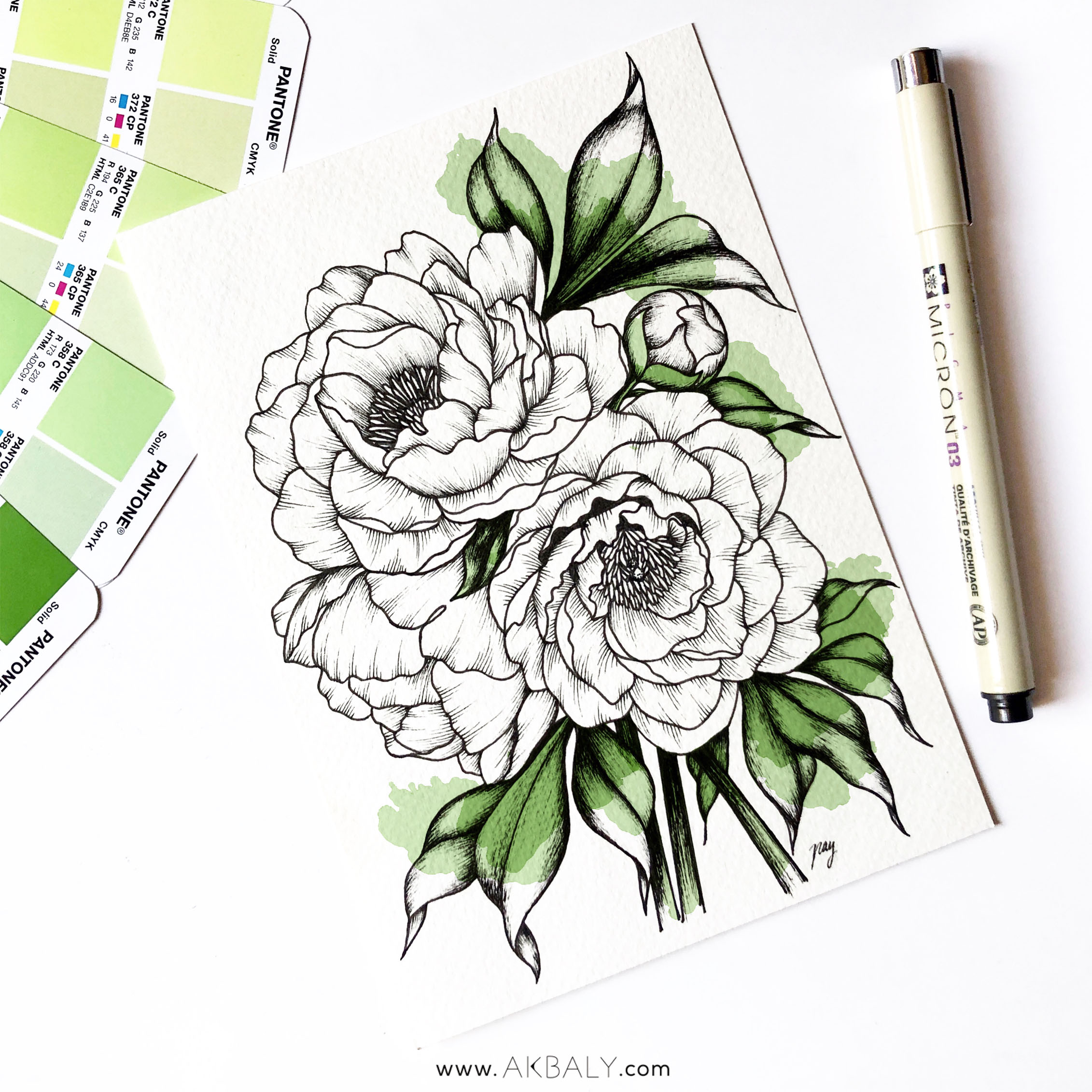 "Illustration ""Peonies IV"" by Akbaly Prints Postcards Pen and Ink"